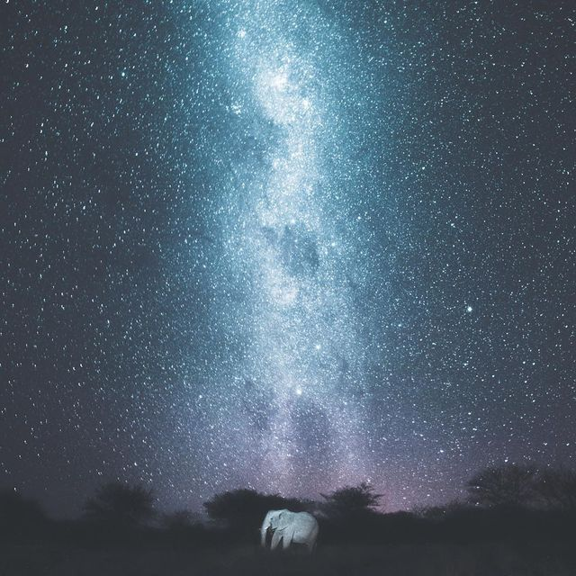 image: Somewhere out there in the cosmos I bet there's a planet of elephants that go on safari to see humans. by donalboyd