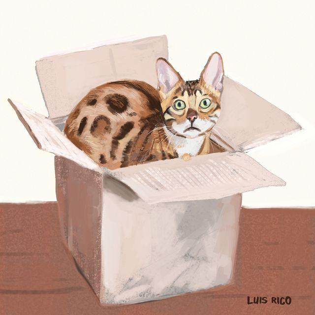 image: Box cat by luisrico