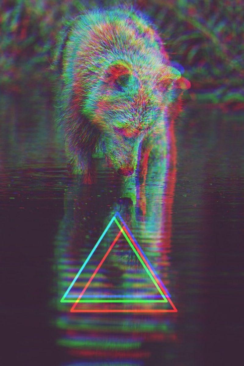 image: BEAR by polpv