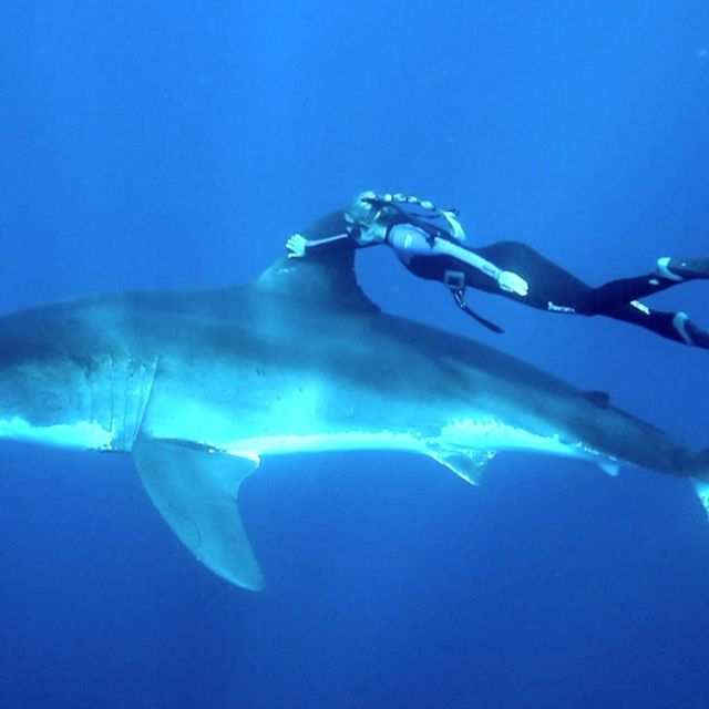 video: A Blonde and a Great White Shark by skynet