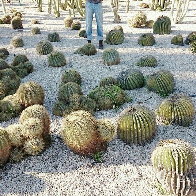 image: Querida, esto no es Arizona. Es la vida. by pilar_francoborrell