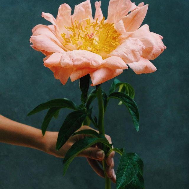 image: La plus belle ✨#flowerpower #pivoine #magnifiiiiiique by jveuxetrebonne