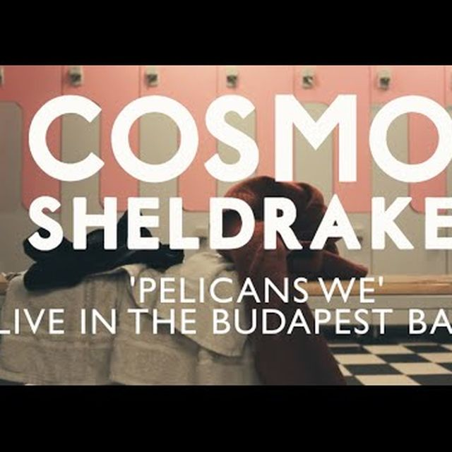 "video: ""Pelicans We"" by Cosmo Sheldrake by jota_bermudez"