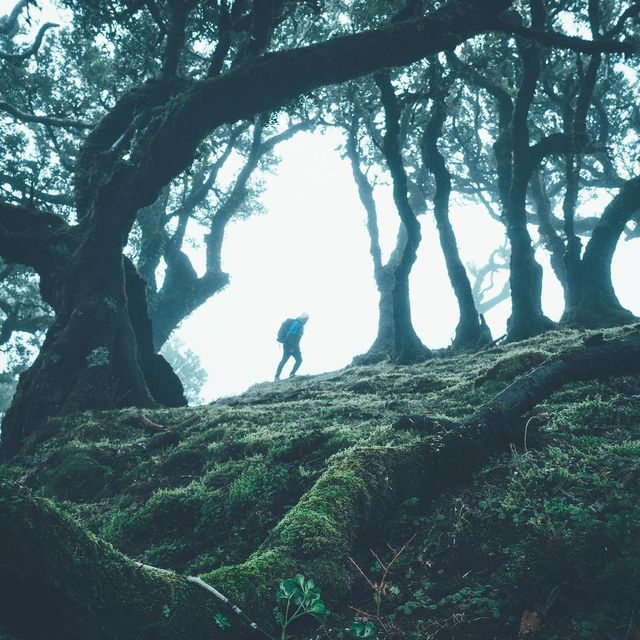 image: Fanal Forest - a place straight out of a fairy tale. Some of these gnarly moss covered trees were already growing when Madeira was discovered in 1419. And you're feeling old?-Thanks @thenorthfaceuk for keeping us dry while exploring these wetlands with... by lennart
