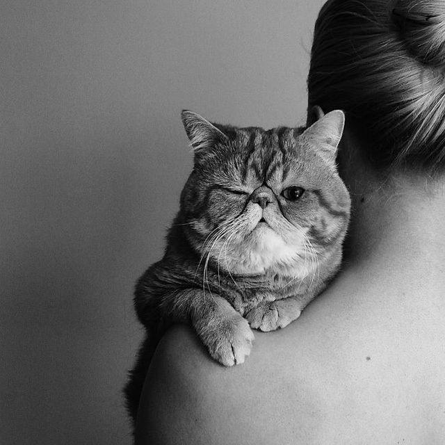 image: CATS by nasti