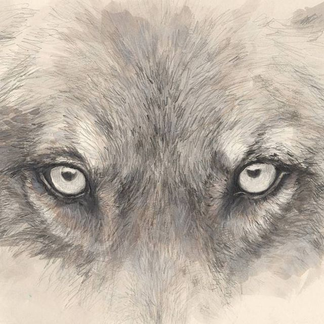 image: the wolf  by elisaancori