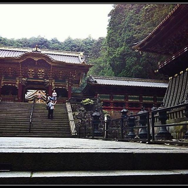 image: Nikko by elena-calabro