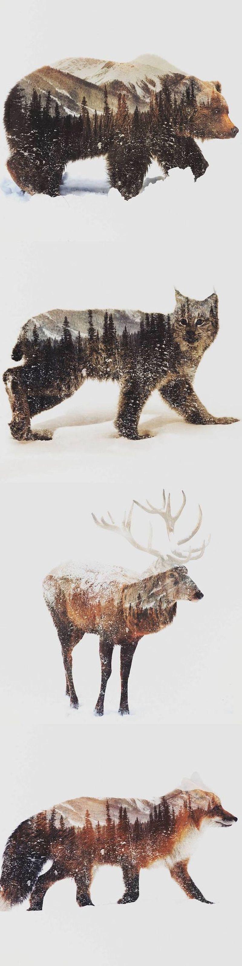 image: ANIMALS SPIRIT by art_seeker