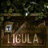 ligula's avatar