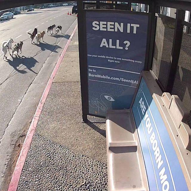 video: Best Bus Stop Ever by lorenafdez