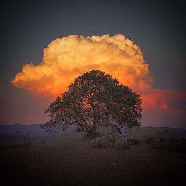 image: Explosion cloud behind a tree in the San Diego mount... by michael_shainblum