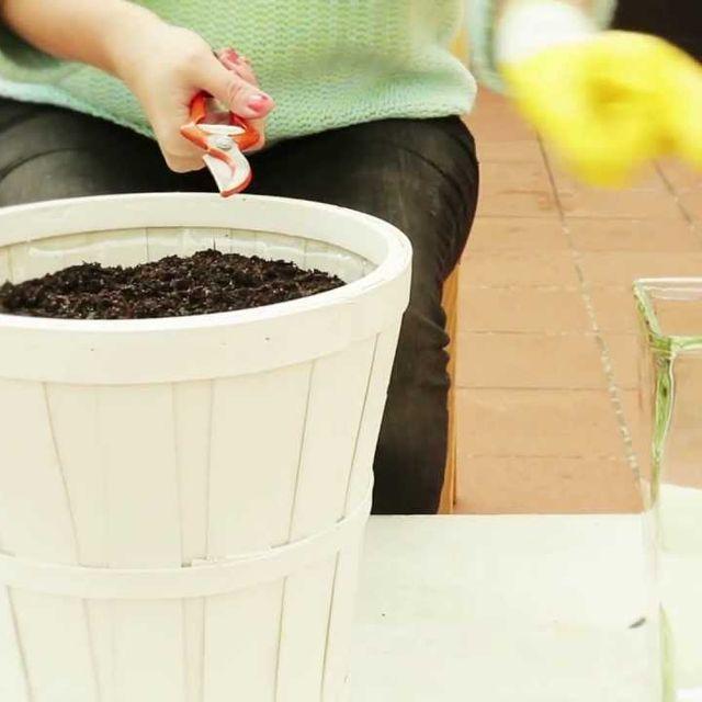 video: ¿Cómo cortar flores invisibles? by ayudaenaccion
