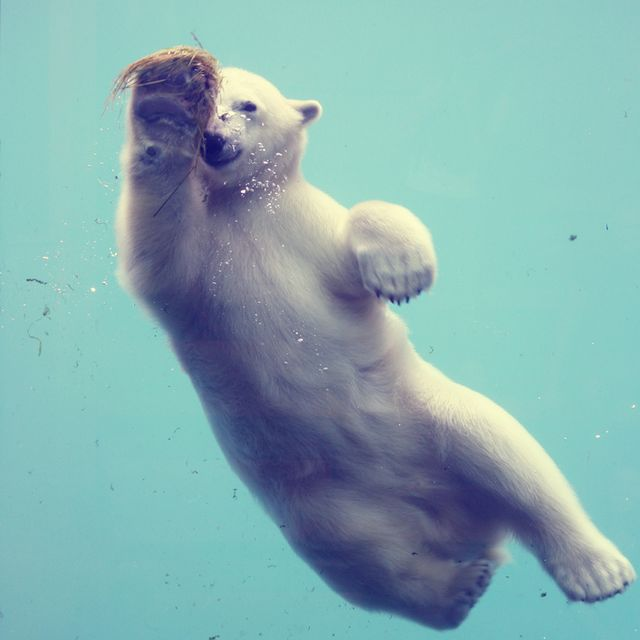 image: Mr Bear by skynet