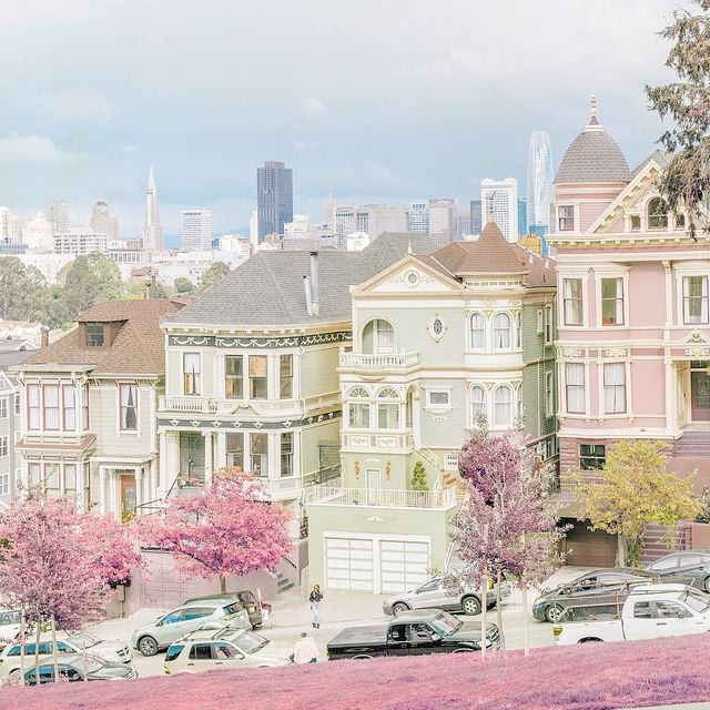 image: Painted ladies' neighbors by teresacfreitas