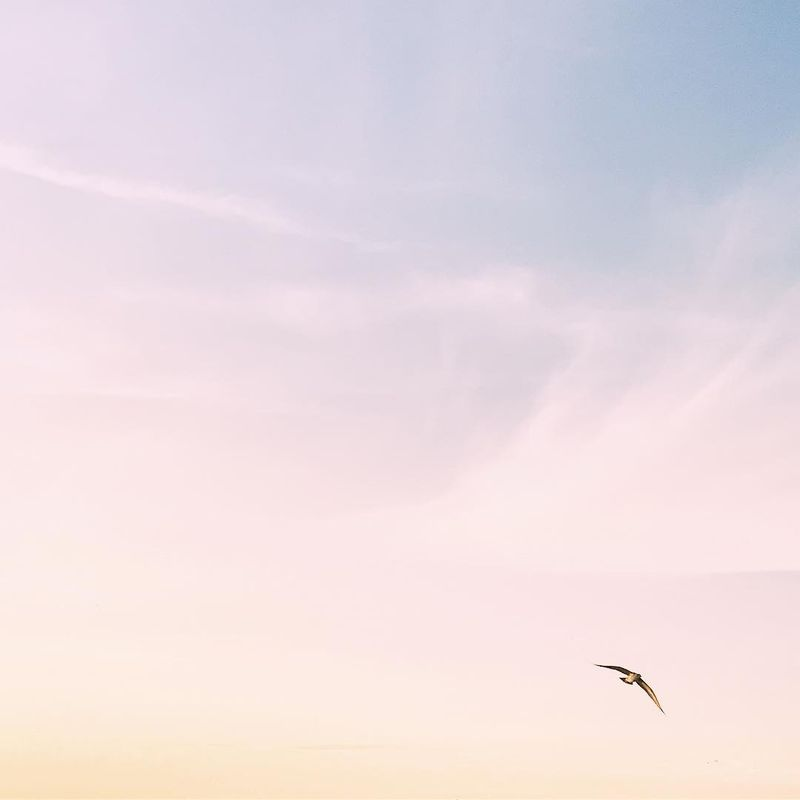 image: I wish I had wings to fly in this sky ?✨? by anamarques210376