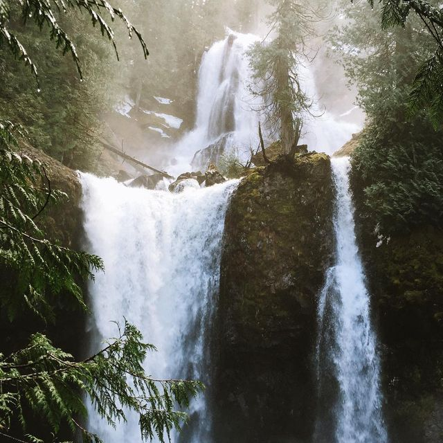 image: Just another reason why I love the Pacific Northwest. by lostintheforrest