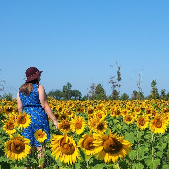 image: When you discover that there's a giant sunflower field in bloom not far from where you live, you kind of have to go and frolic in it. Especially when it's for a good cause. ?This field is called Maria's Field of Hope, and is planted and maintained... by dangerousbiz