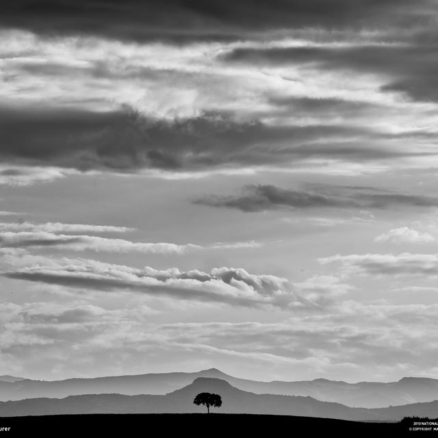 image: Lonely Tree 2 by gonzalobandeira
