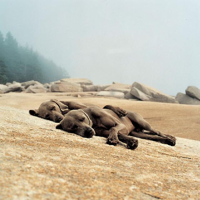 image: Washed Up, 2002. William Wegman by decmykargb