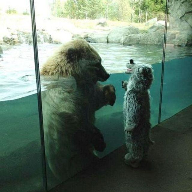 image: teddy bear by patrick