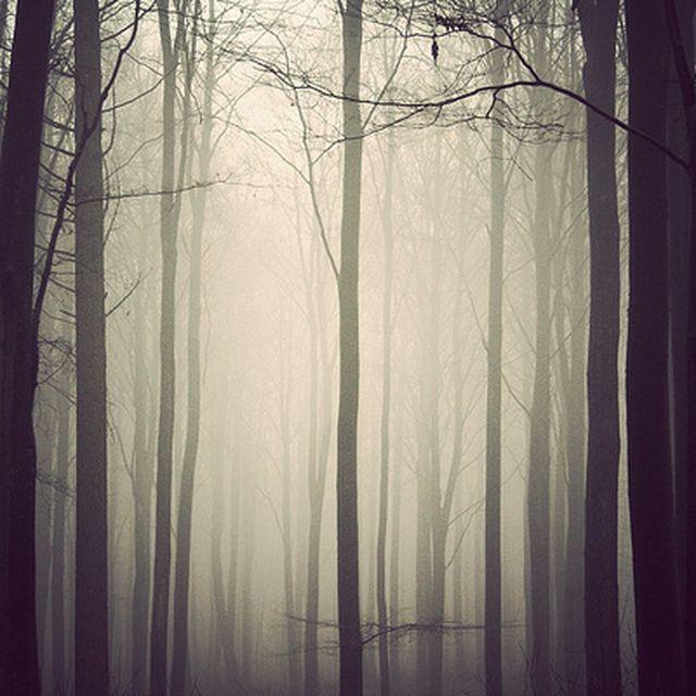 image: The Trees by borjadelgado