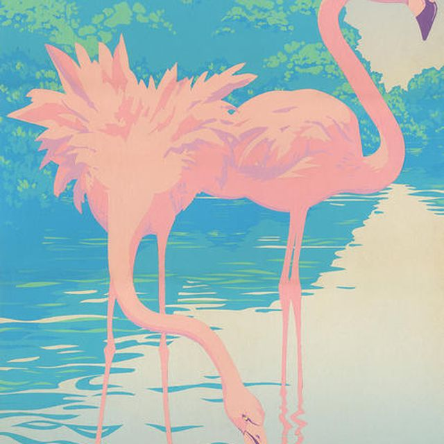 image: FlaminGo. by is