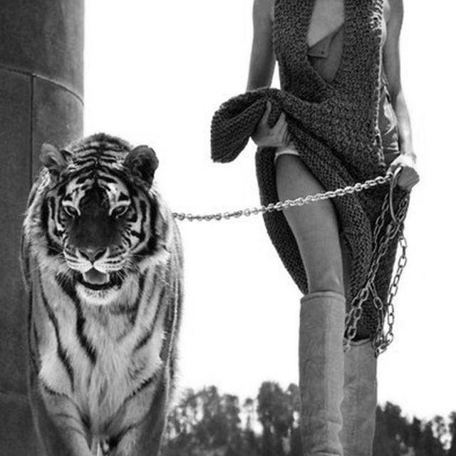 image: sienna's pet by ingridfabre