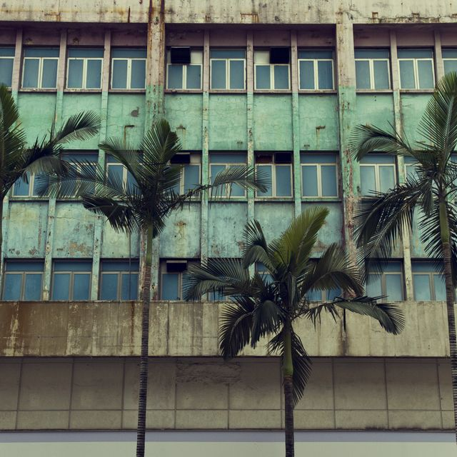 image: Palms in the city by rusy