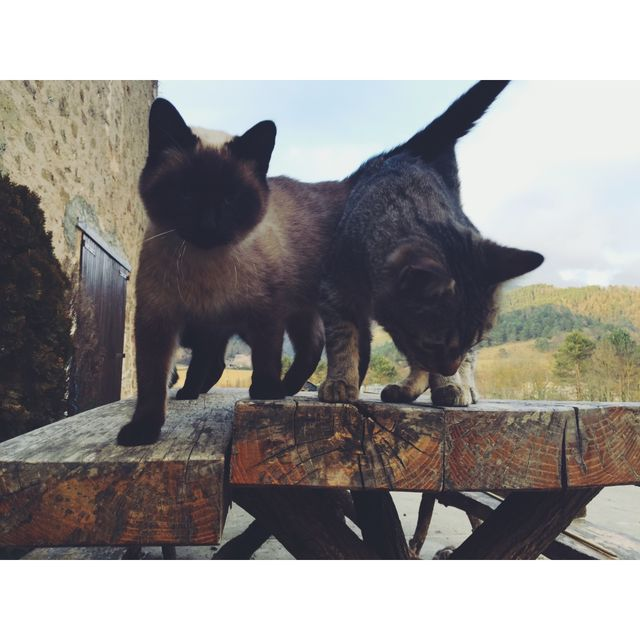 image: cats by annagr