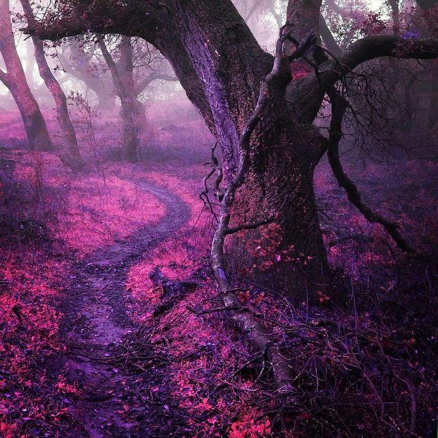 image: A Pink Surreal World by jenniferasos