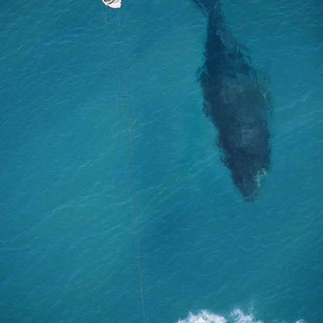 image: Kitesurfing whale by Kike