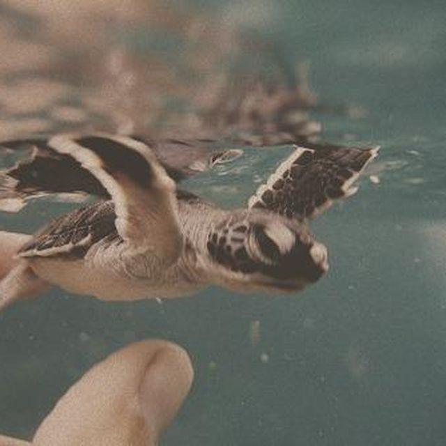 image: Tickling turtles by bruno