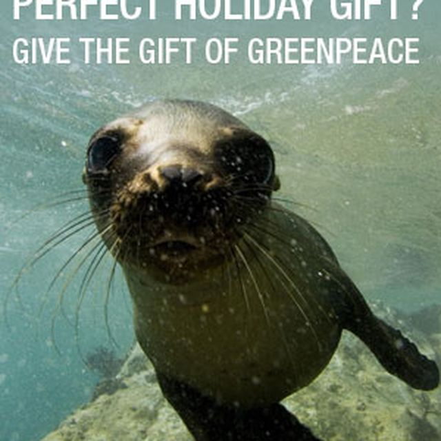 image: GREEN PEACE GIFT by betterworld