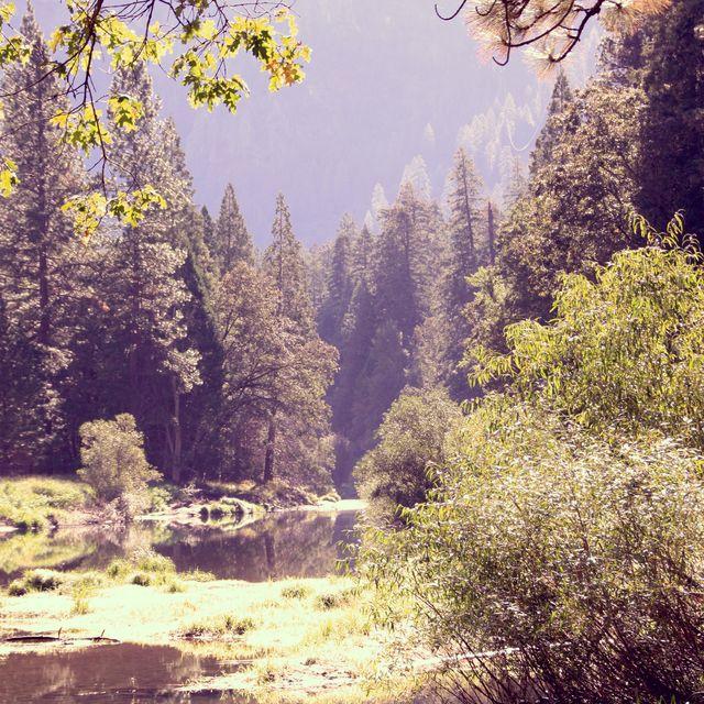 image: Naturaleza nativa by anittabaker