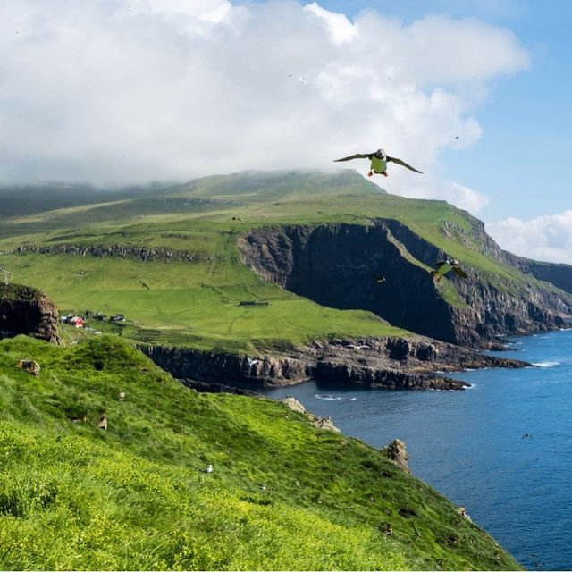 image: Mykines is the most westerly of the Faroe Islands. And it's absolute heaven for bird-lovers. In the summer months, thousands of birds nest here - including adorable Atlantic puffins! How many puffins can you spot in this photo? by dangerousbiz
