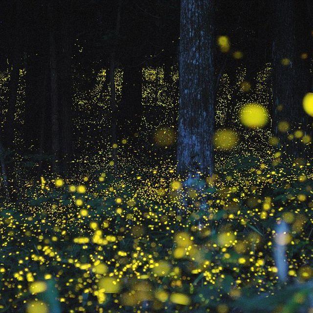 image: Bioluminescence by magicberrys