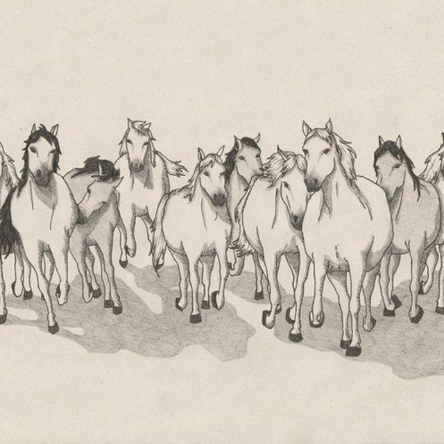 image: Wild Horses by marta_brandariz
