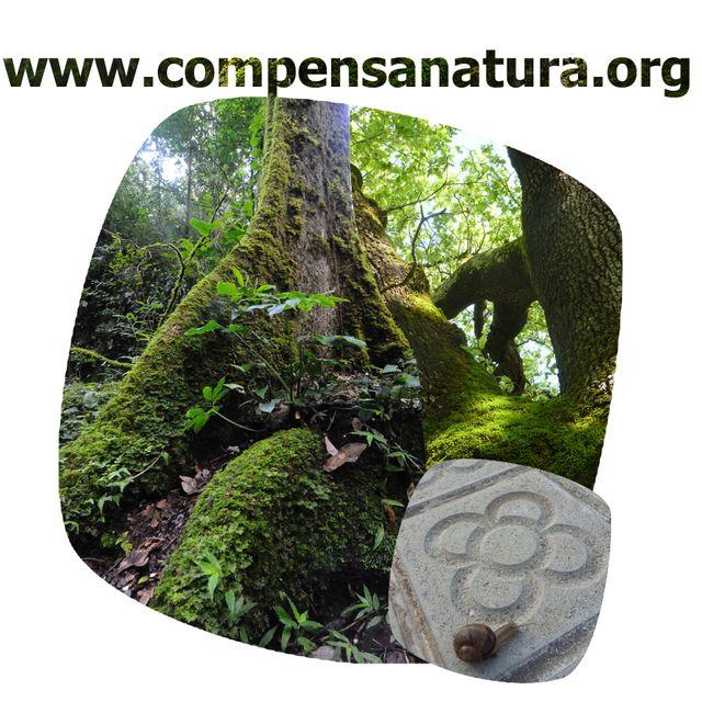 image: CompensaNatura - land cover nature balance initiative by accionatura
