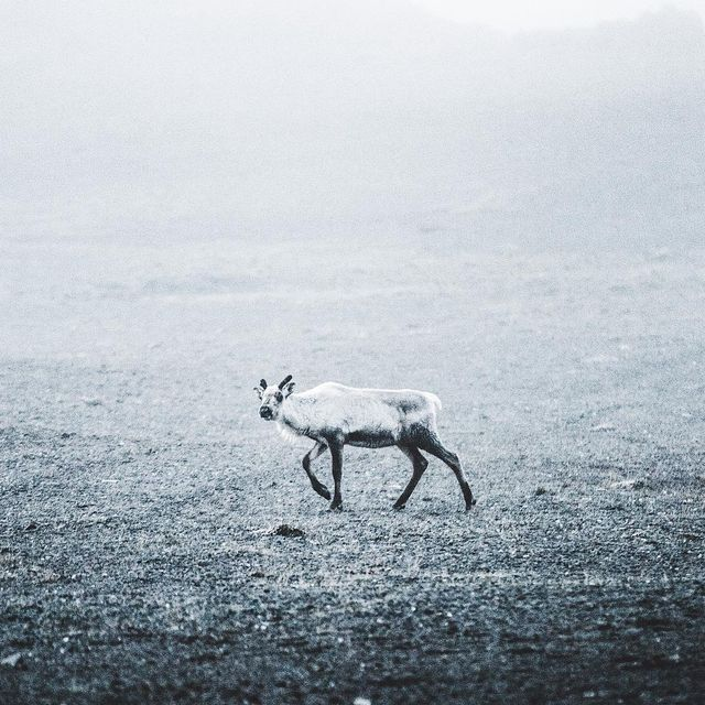 image: The lone traveler. by donalboyd