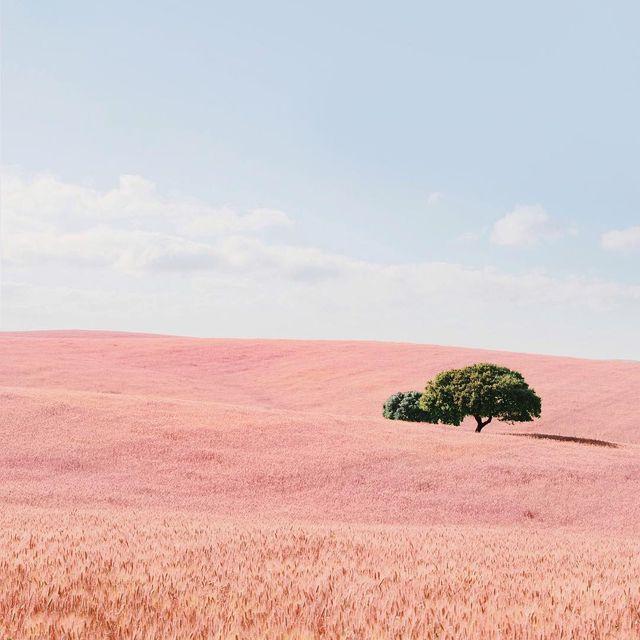 image: A Pink Garden by teresacfreitas