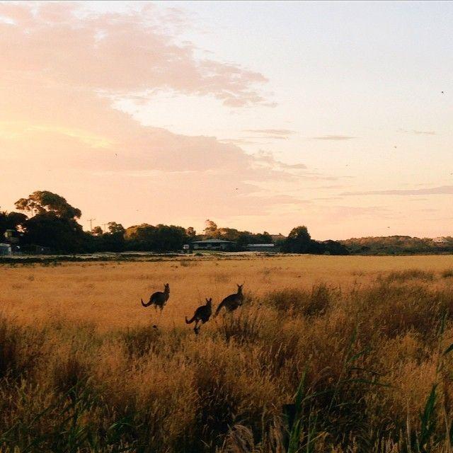 image: Australia by alba_galocha