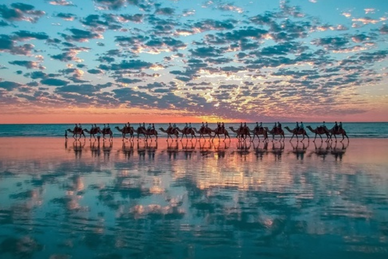 image: CAMELS by carm