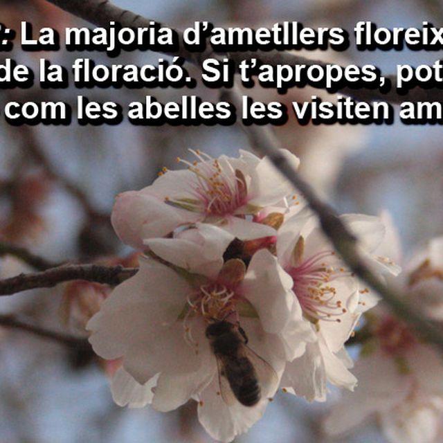 image: Recomanació NATURAL Febrer by @accionatura by accionatura