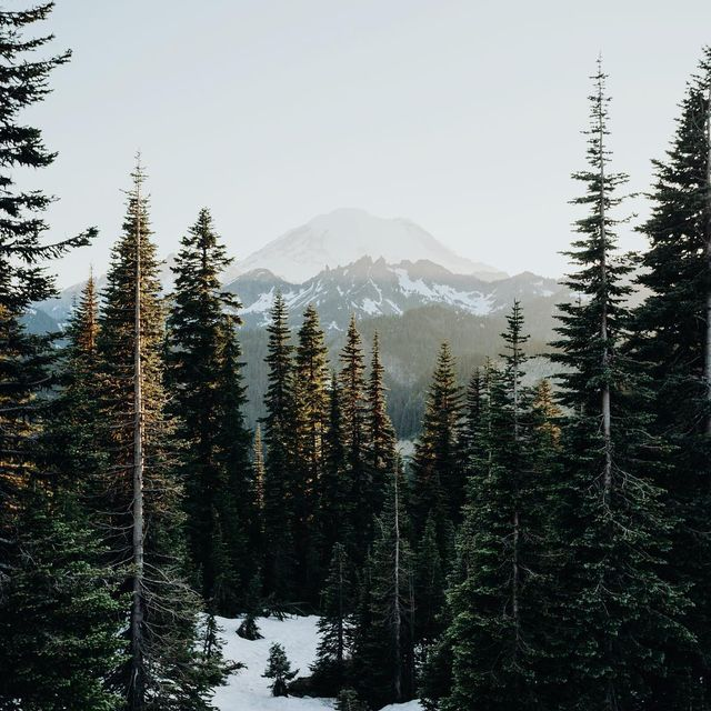 image: Yesterday was Mount Rainer's birthday. I'm so sorry I forgot to say happy birthday. by cameronleeanderson
