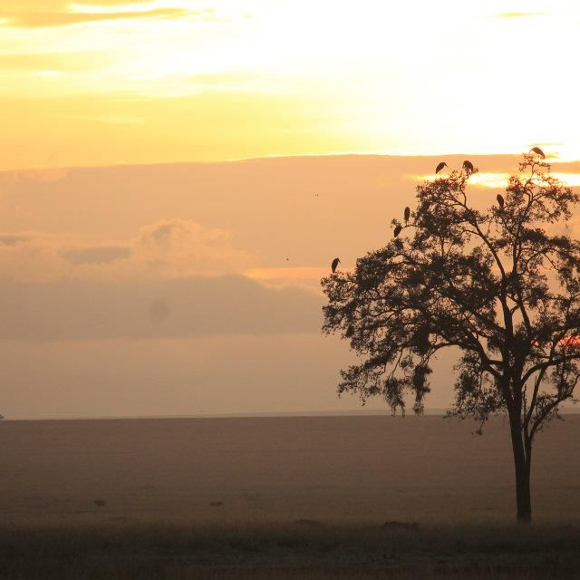 image: Africa wakes up! by Cote