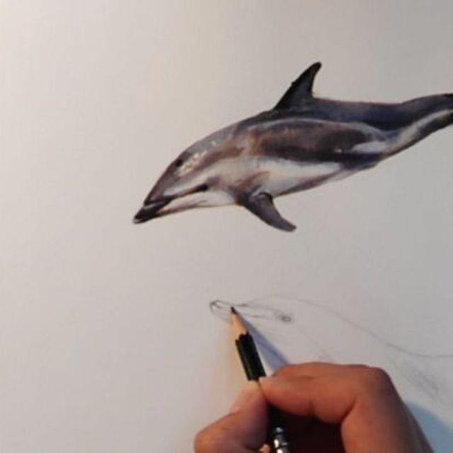 image: Delfín moteado ?(wip parte 1) mi segunda participación para #inktober2017 ??hecho con tinta parker y guasch ?? #inktober #dolphin #love #sealife #wild #freethedolphins #dive #sea #ink #parker #painting #animal #illustration #watercolor #delfin #ilustracio by elisaancori