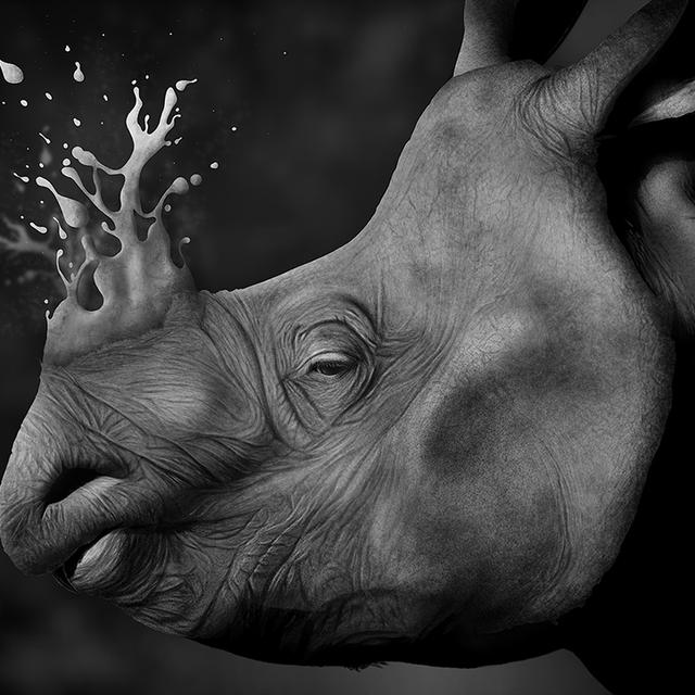 image: Rhino by jaime-sanjuan