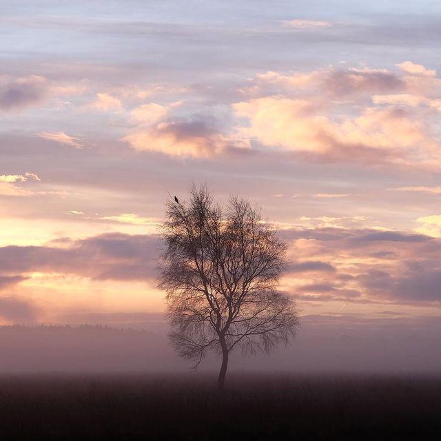 image: Tree time ~ by plndm