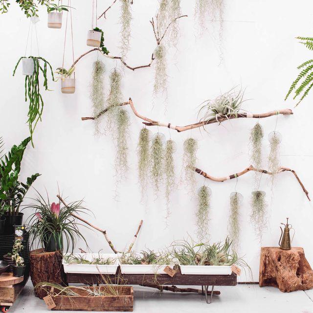 image: plantas vivas by only4four