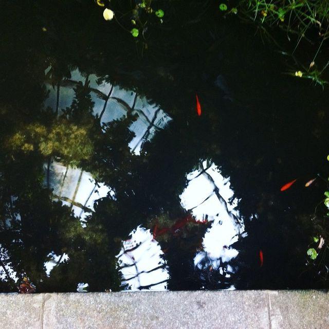 image: JAPANISH FISHES by emewarp